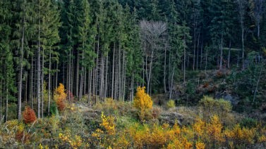 Click here for forestry applications.