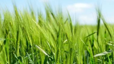 Click here for turf and agriculture applications.