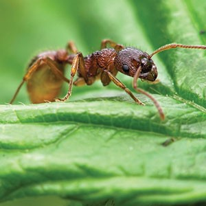 Control ants, roaches, fleas, mosquitoes, and other insects